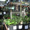 native plant shop at golden gate park