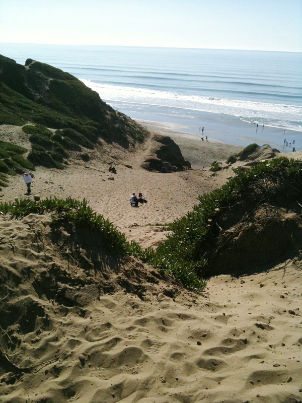 t-shirts, dogs & tennis balls at ft. funston